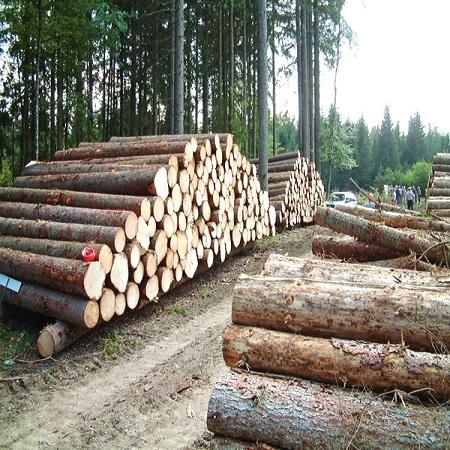 به طور میانگین هر درخت میتواند 16.67 بند کاغذ با اندازه A4 تولید کند که هر بند نیز 500 برگه کاغذ را شامل میشود.